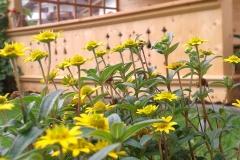 Gartenlaube hinter dem Haus